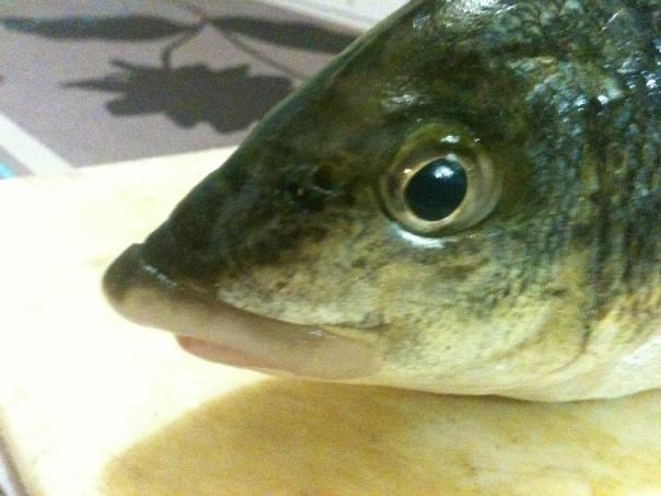 pigok fish
