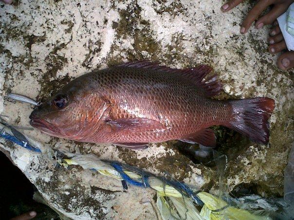 largo fish philippines