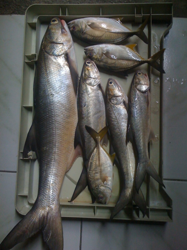 Navotas Fishing