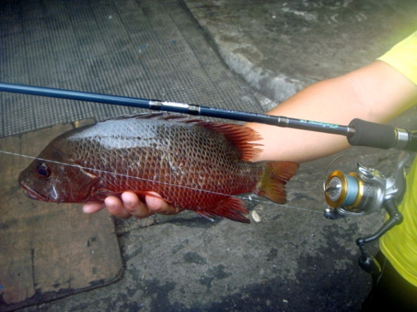 Snapper Philippines Lures