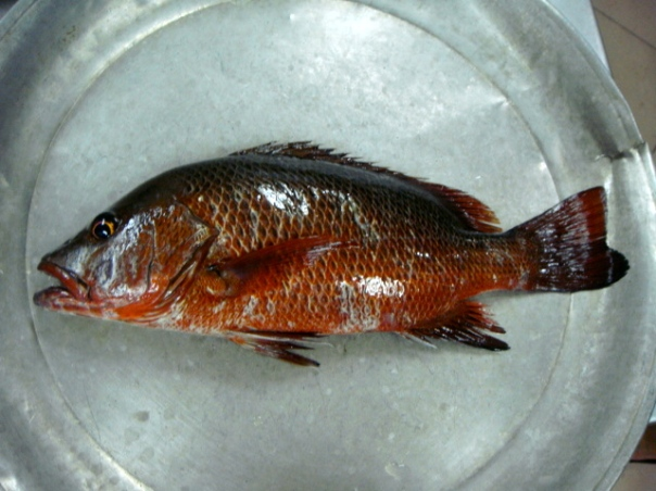 Lure Fishing Cebu