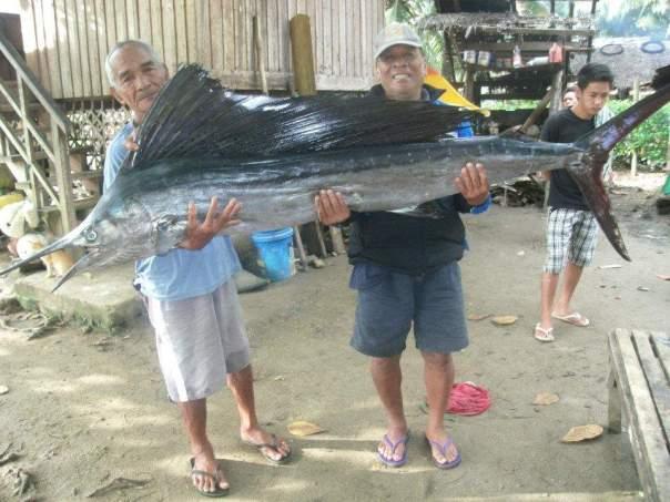 billfish philippines