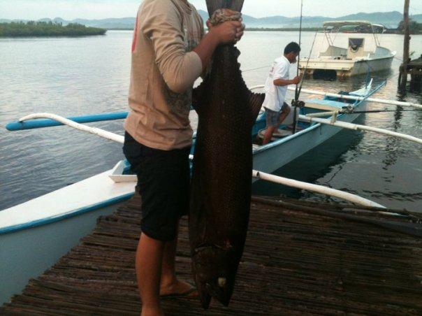 oilfish