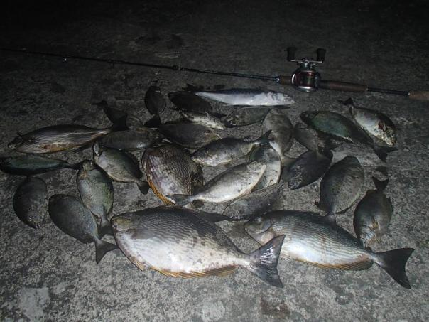 A good haul of Danggit and Kitong caught on a float rig