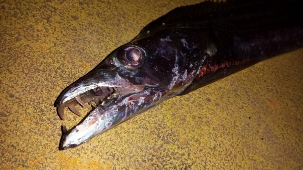 Espada fish